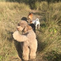 Dog Walking Woolharah, Dog Walking Bondi