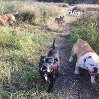 Dog Walker Paddington, Dog Walker Woollahra