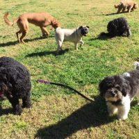 Dog Walker Woollahra, Dog Walker Bondi