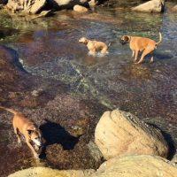 Dog Walker Bondi, Dog Walker Double   bay