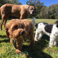 Dog Walker Double   bay, Dog Walker Bellevue Hill